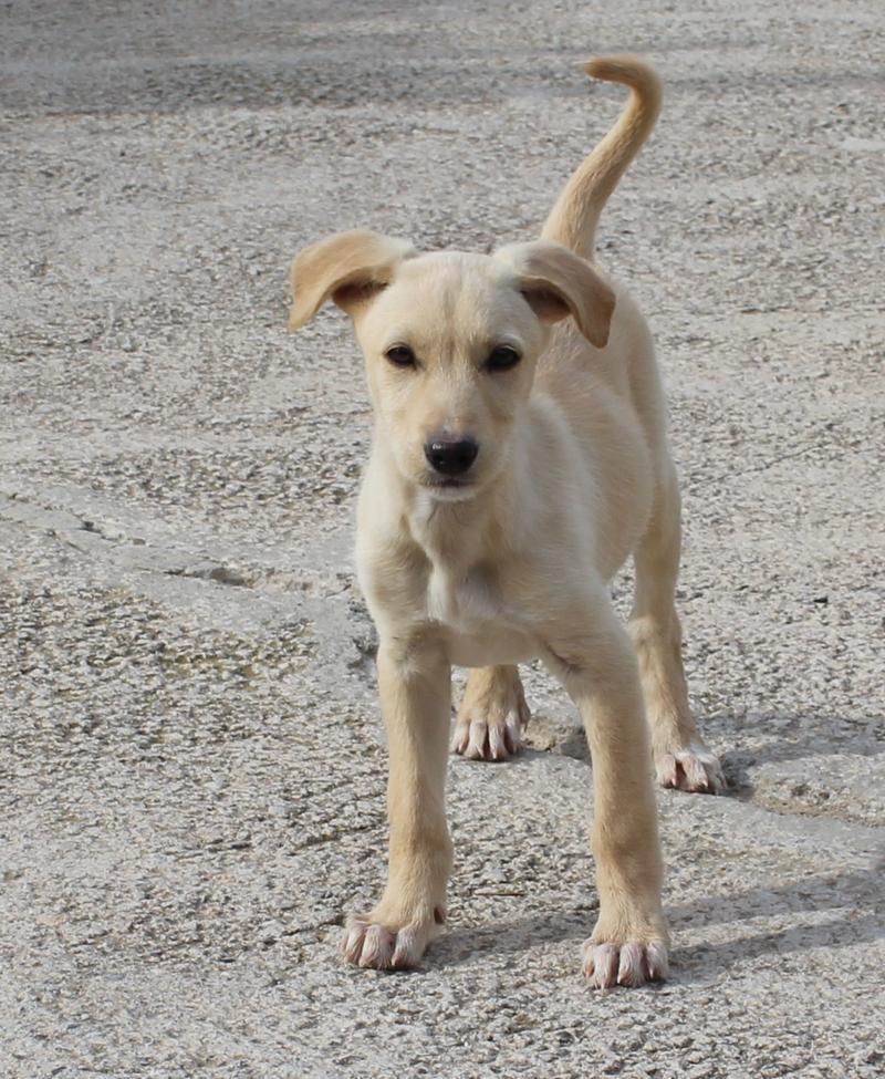 Bildertagebuch -  Kenia: pfiffiges Hunde-Mädel sucht konsequente, liebe und  souveräne Familie! - VERMITTELT - 25281931gg