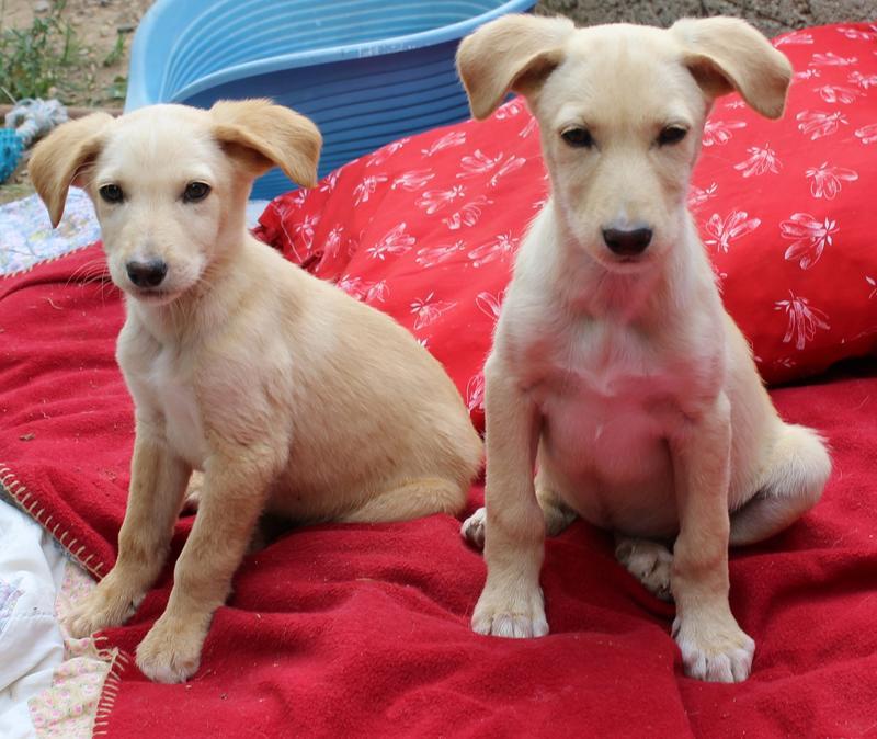 Bildertagebuch -  Kenia: pfiffiges Hunde-Mädel sucht konsequente, liebe und  souveräne Familie! - VERMITTELT - 25281932jq