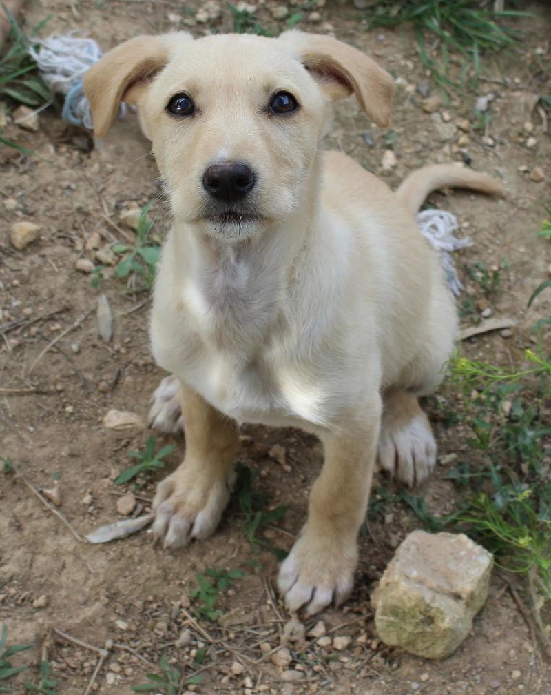 Bildertagebuch -  Kenia: pfiffiges Hunde-Mädel sucht konsequente, liebe und  souveräne Familie! - VERMITTELT - 25281933yu