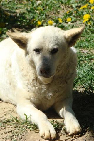Angel lebte glücklich in Österreich RIP hübsche Maus 25549181oc