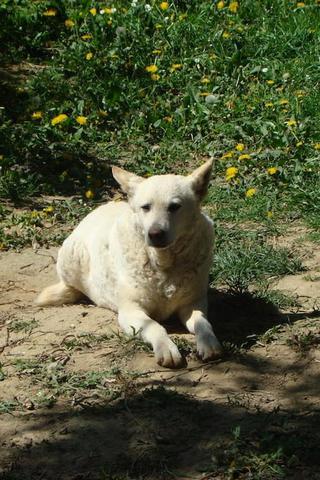 Angel lebte glücklich in Österreich RIP hübsche Maus 25549182en