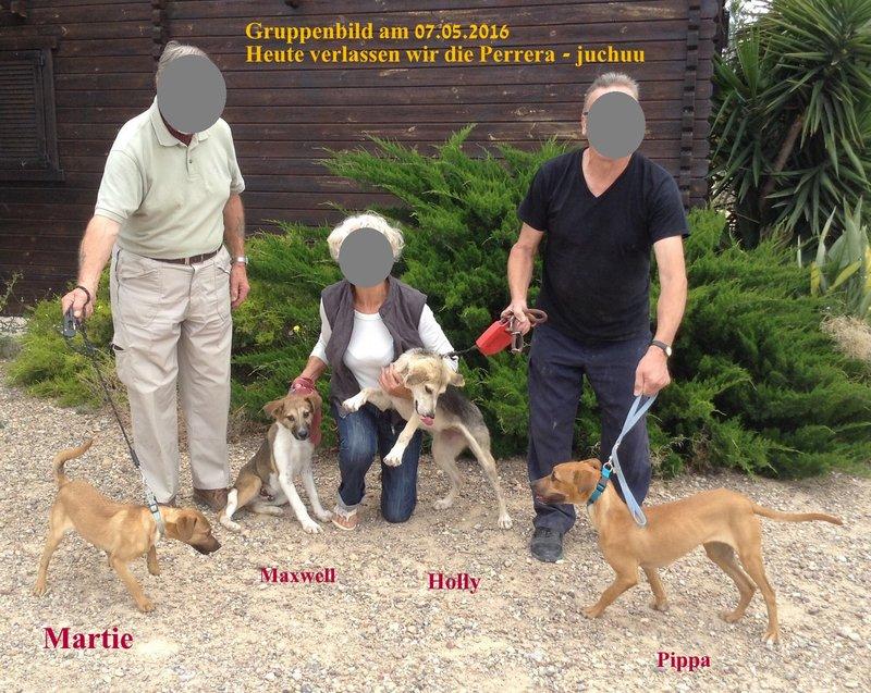 Bildertagebuch -  Holly: junges und lebensfrohes Hundemädchen sucht ihr Zuhause...VERMITTELT! 25655206ap