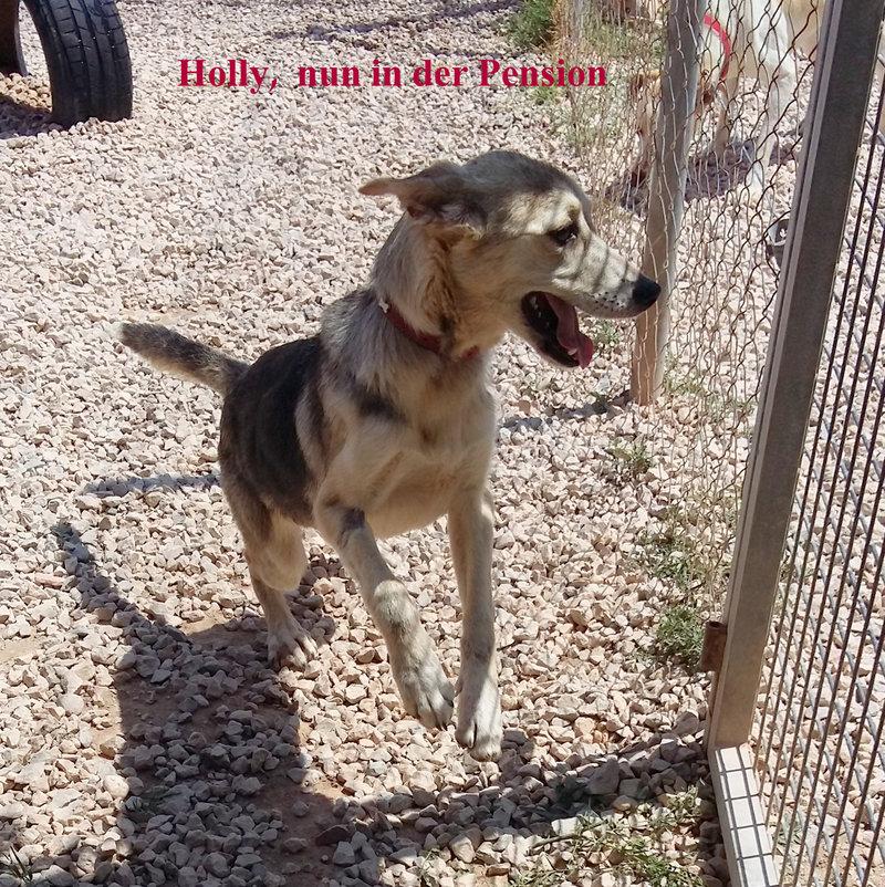 Bildertagebuch -  Holly: junges und lebensfrohes Hundemädchen sucht ihr Zuhause...VERMITTELT! 25655225ct