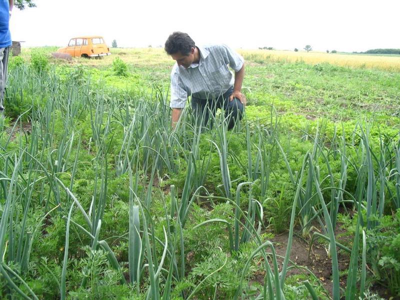 Organska poljoprivreda 25662191ey