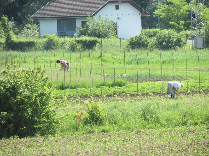 Organska poljoprivreda 25662250oq