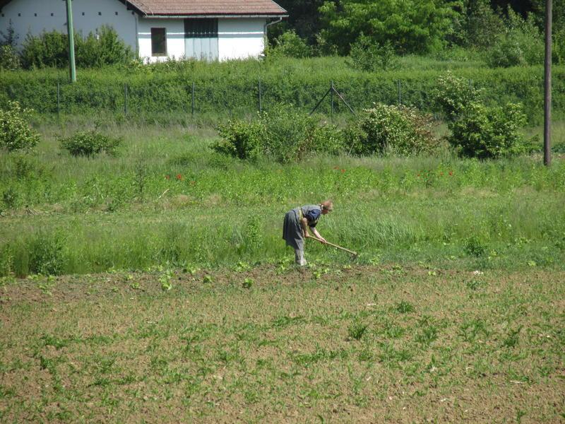 Organska poljoprivreda 25662267hi