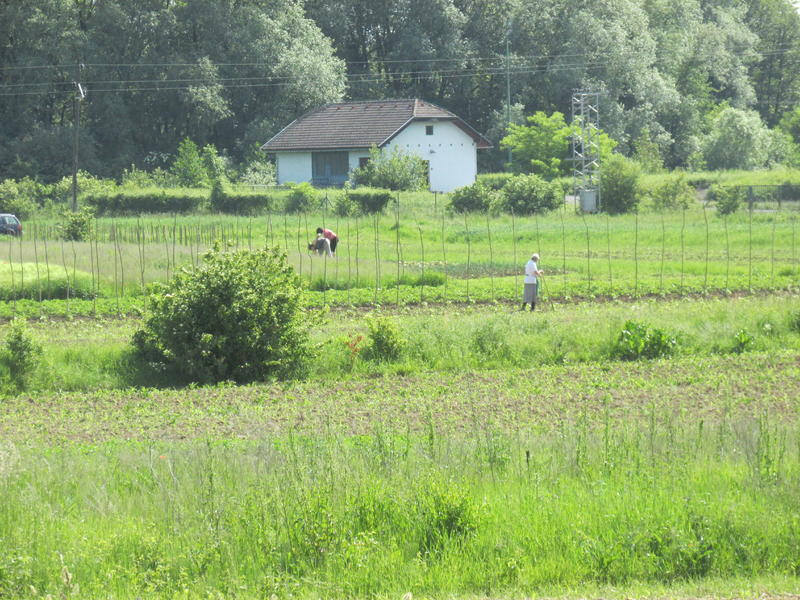 Organska poljoprivreda 25662277es