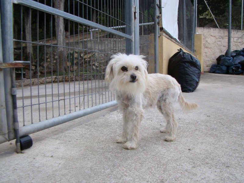 Bildertagebuch -  Aula: kleine Hundeprinzessin sucht Menschen mit Herz und Hundeverstand! - in Spanien ZUHAUSE GEFUNDEN! 25898363sw