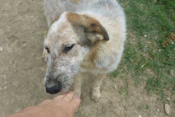 Bildertagebuch -  Verbena: junges, liebenswertes und sehr hübsches Hundemädchen wünscht sich eine aktive Familie! 25905423vq