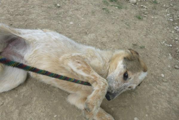 Bildertagebuch -  Verbena: junges, liebenswertes und sehr hübsches Hundemädchen wünscht sich eine aktive Familie! 25905427ve