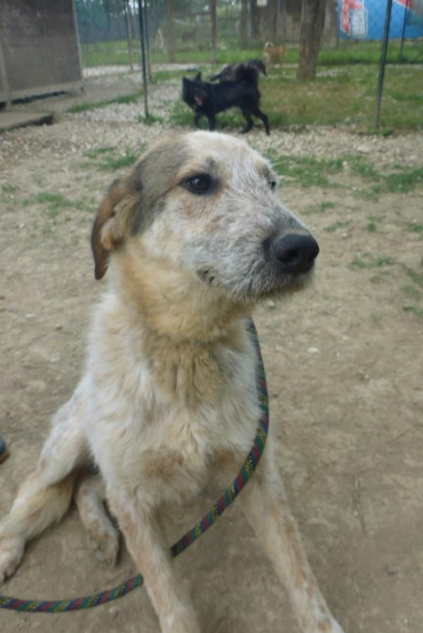 Bildertagebuch -  Verbena: junges, liebenswertes und sehr hübsches Hundemädchen wünscht sich eine aktive Familie! 25905430ti