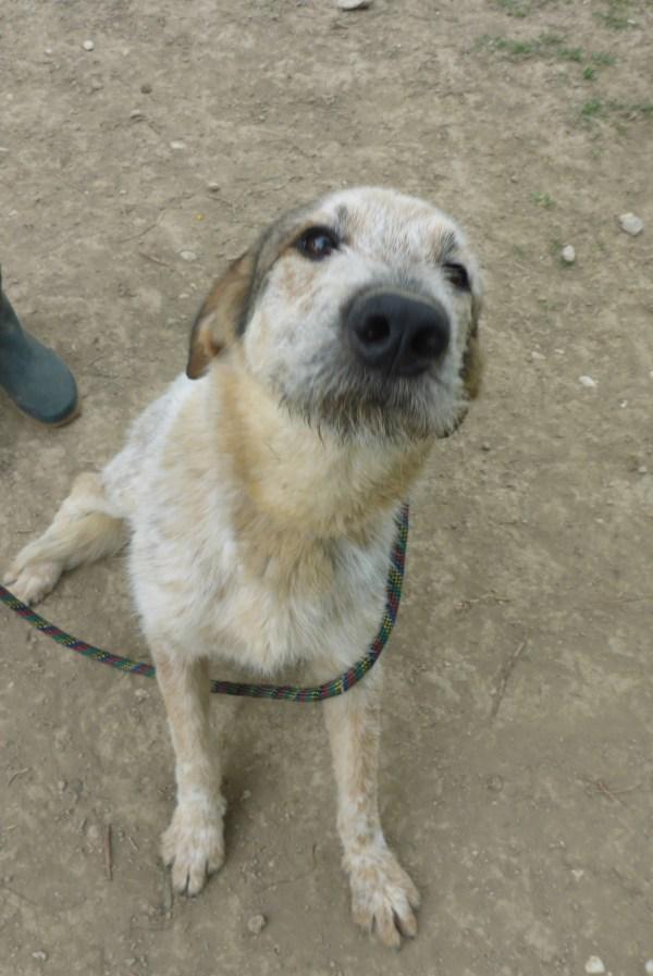 Bildertagebuch -  Verbena: junges, liebenswertes und sehr hübsches Hundemädchen wünscht sich eine aktive Familie! 25905432rh