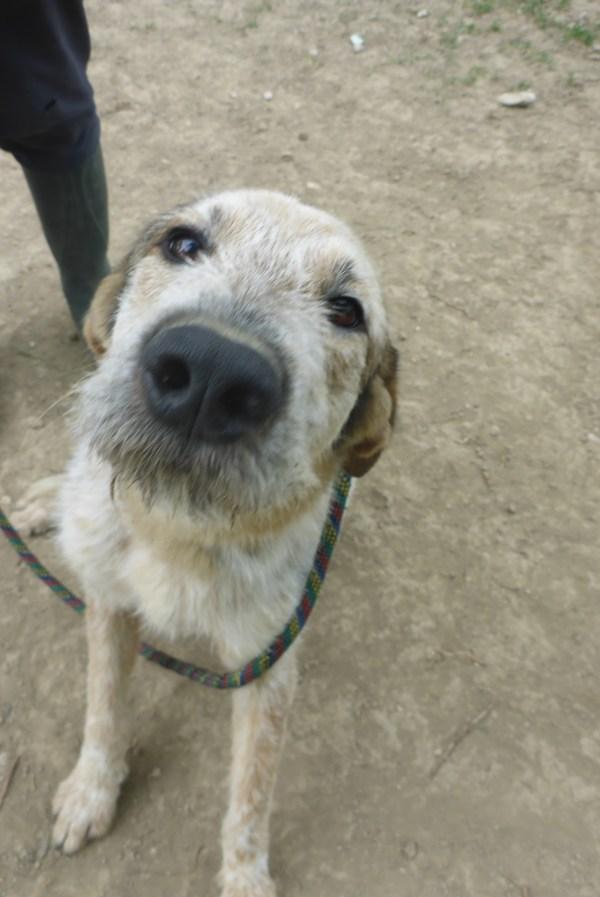 Bildertagebuch -  Verbena: junges, liebenswertes und sehr hübsches Hundemädchen wünscht sich eine aktive Familie! 25905433pr