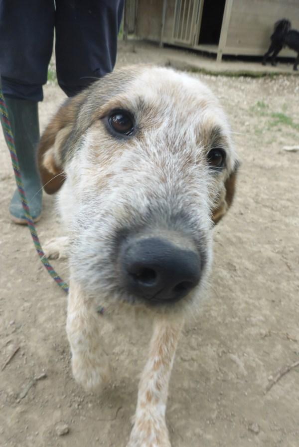 Bildertagebuch -  Verbena: junges, liebenswertes und sehr hübsches Hundemädchen wünscht sich eine aktive Familie! 25905437sr