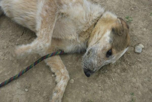 Bildertagebuch -  Verbena: junges, liebenswertes und sehr hübsches Hundemädchen wünscht sich eine aktive Familie! 25905438hx