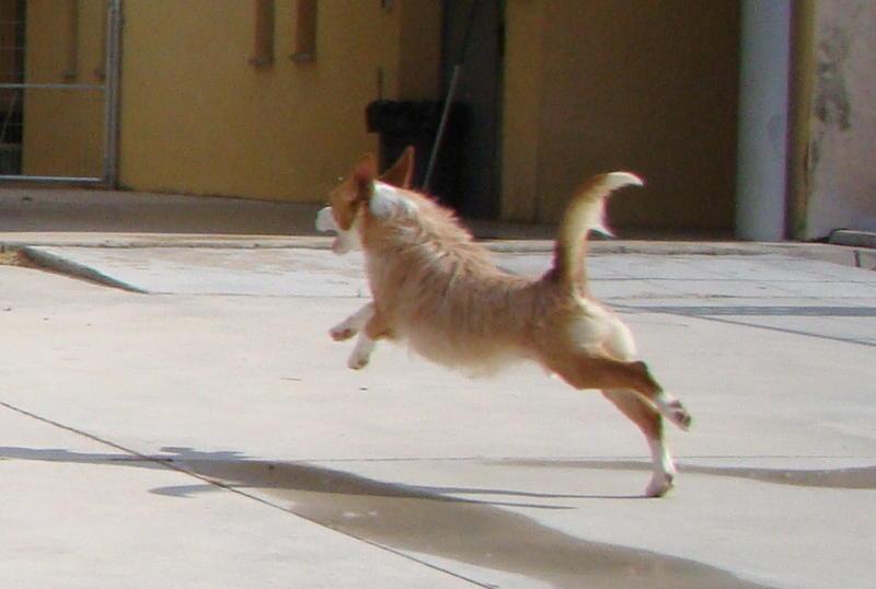 Bildertagebuch - Ares, ein kleiner süßer Bub, wartet schon lange auf einem Kuschelplatz ...ZUHAUSE in SPANIEN GEFUNDEN! 25921025yr