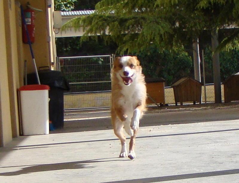 Bildertagebuch - Ares, ein kleiner süßer Bub, wartet schon lange auf einem Kuschelplatz ...ZUHAUSE in SPANIEN GEFUNDEN! 25921026ih