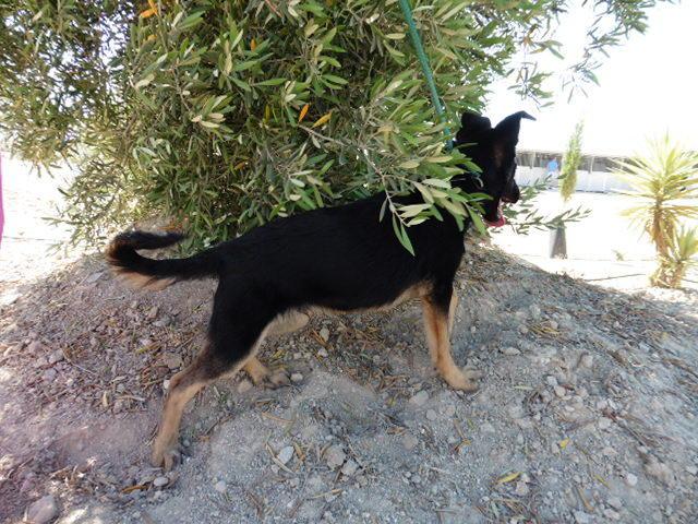 Bildertagebuch - Luki, süßes nettes kleines Hundekind der ein großer Kerl werden möchte ... VERMITTELT! 25962107bw