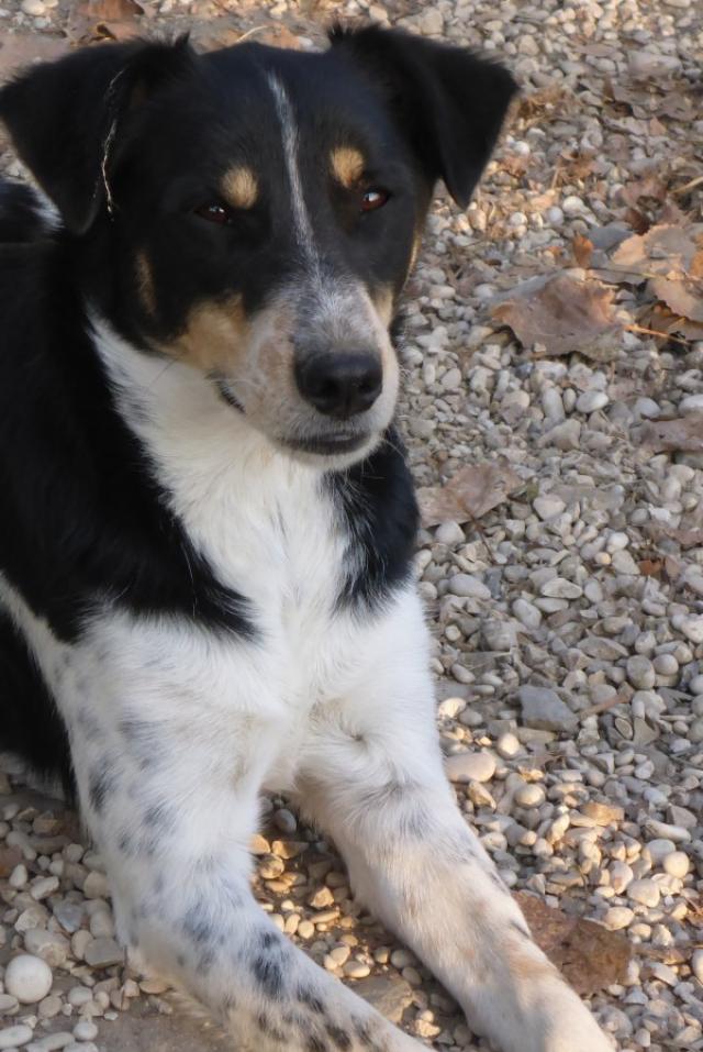 Bildertagebuch -  Roscoe: kleiner Charmeur, der gerne Ihr Herz im Sturm erobern möchte - Wird über eine andere Orga vermittelt!!! 26060885jq