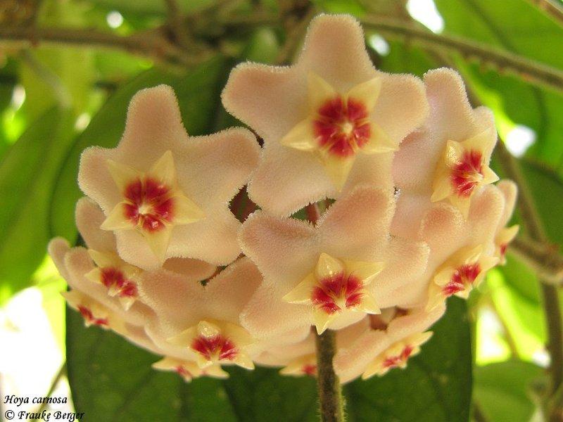 Blüten 2016 - Seite 7 26122275qf