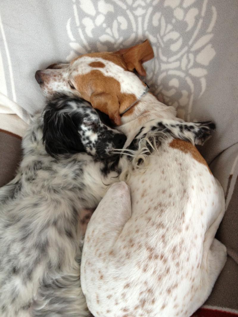 Bildertagebuch - Ginger lebt jetzt als Dauerpflegehund bei ihrer Pflegefamilie 26266915wy