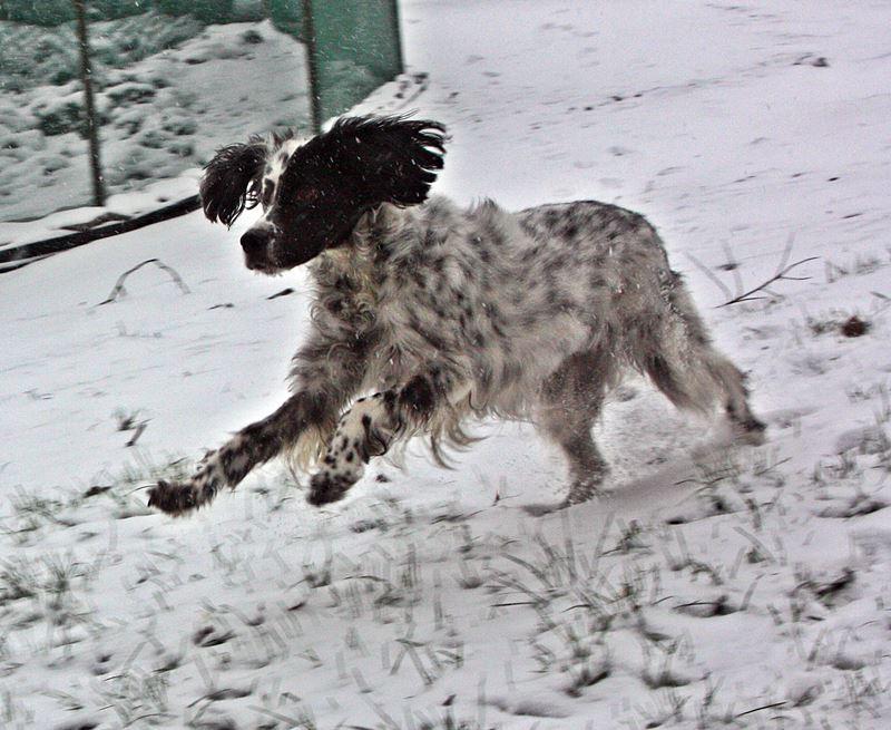 Bildertagebuch - Ginger lebt jetzt als Dauerpflegehund bei ihrer Pflegefamilie 26266959zl