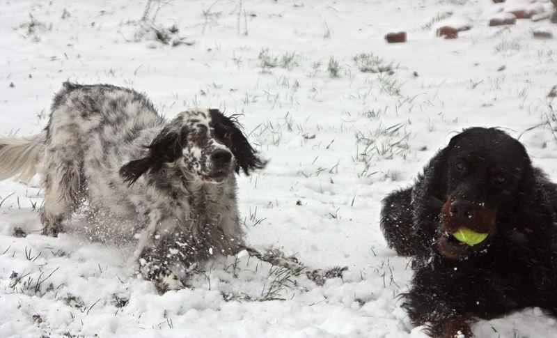 Bildertagebuch - Ginger lebt jetzt als Dauerpflegehund bei ihrer Pflegefamilie 26266962cu