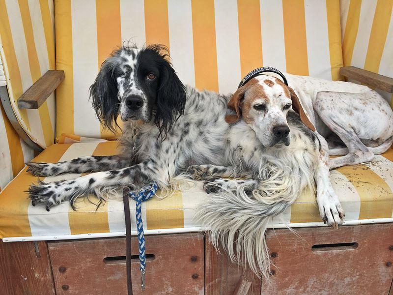 Bildertagebuch - Ginger lebt jetzt als Dauerpflegehund bei ihrer Pflegefamilie 26266975sb