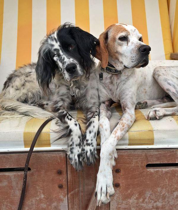 Bildertagebuch - Ginger lebt jetzt als Dauerpflegehund bei ihrer Pflegefamilie 26266977mf