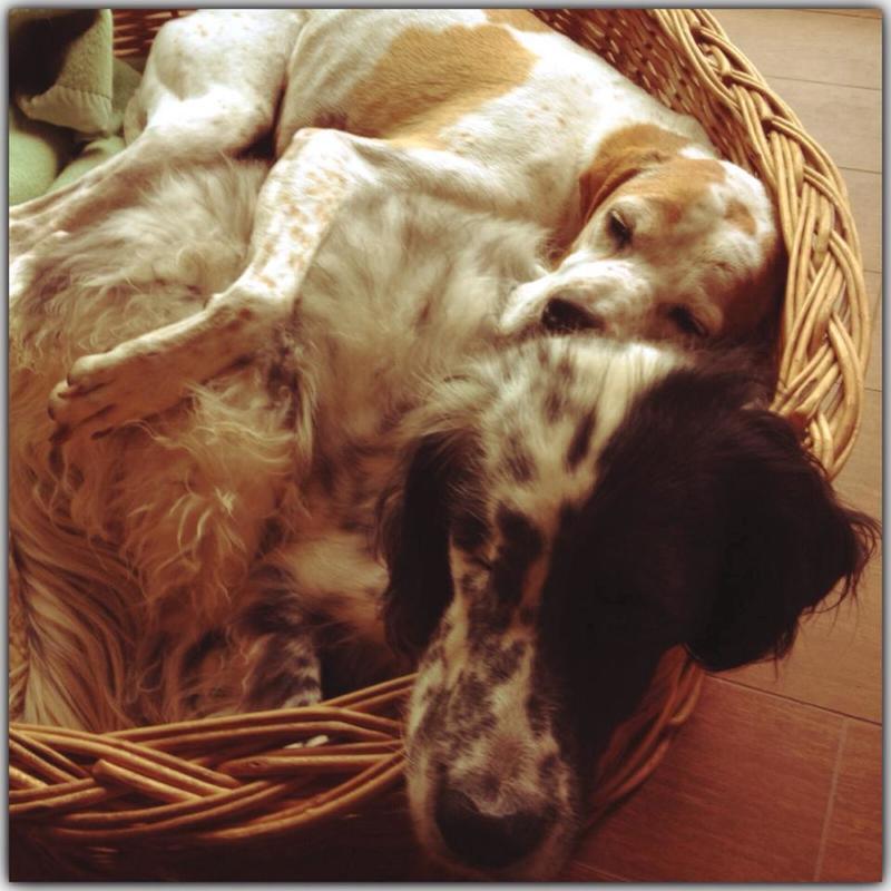 Bildertagebuch - Ginger lebt jetzt als Dauerpflegehund bei ihrer Pflegefamilie 26266978ll