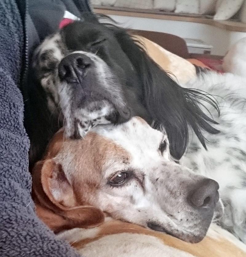 Bildertagebuch - Ginger lebt jetzt als Dauerpflegehund bei ihrer Pflegefamilie 26266979br