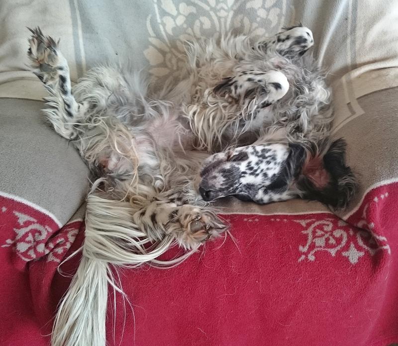 Bildertagebuch - Ginger lebt jetzt als Dauerpflegehund bei ihrer Pflegefamilie 26266982pz