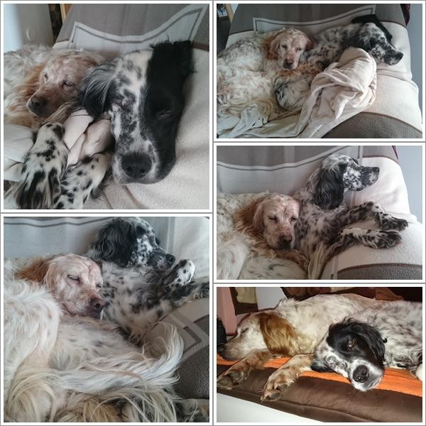 Bildertagebuch - Ginger lebt jetzt als Dauerpflegehund bei ihrer Pflegefamilie 26266983cx