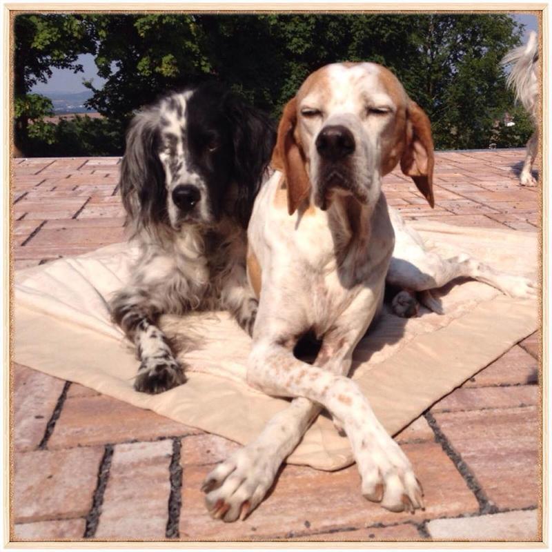 Bildertagebuch - Ginger lebt jetzt als Dauerpflegehund bei ihrer Pflegefamilie 26266984lq