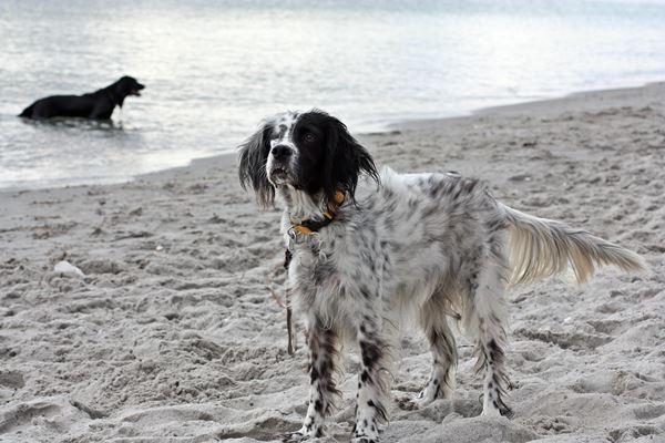 Bildertagebuch - Ginger lebt jetzt als Dauerpflegehund bei ihrer Pflegefamilie 26266985su
