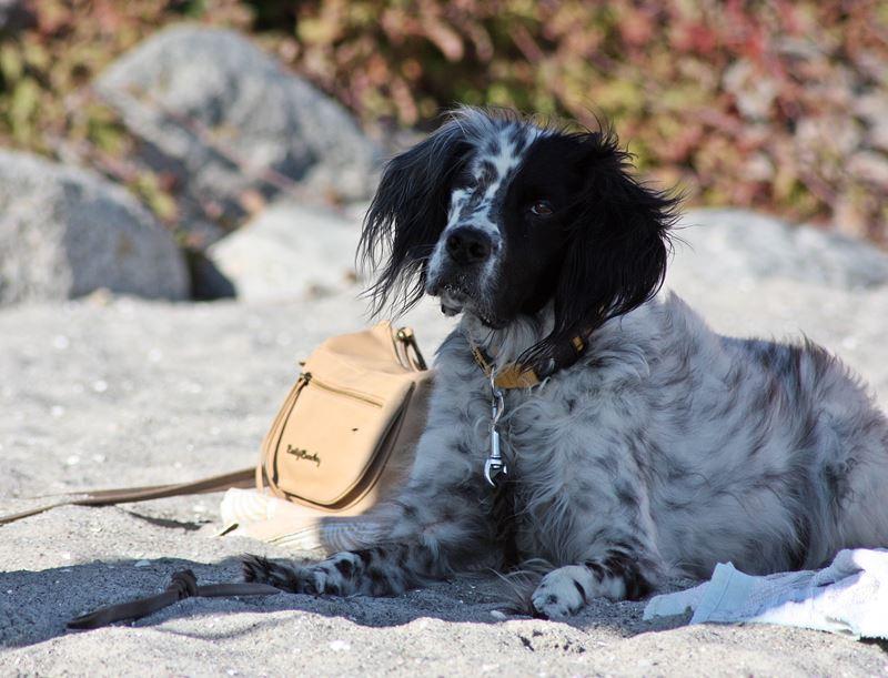 Bildertagebuch - Ginger lebt jetzt als Dauerpflegehund bei ihrer Pflegefamilie 26266986dh