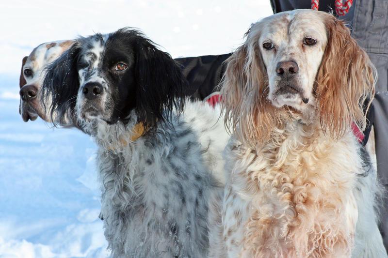Bildertagebuch - Ginger lebt jetzt als Dauerpflegehund bei ihrer Pflegefamilie 26267013ue