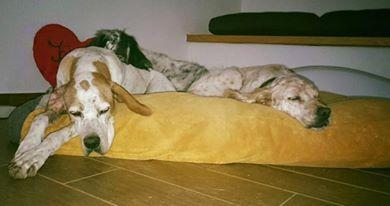 Bildertagebuch - Ginger lebt jetzt als Dauerpflegehund bei ihrer Pflegefamilie 26267751tw