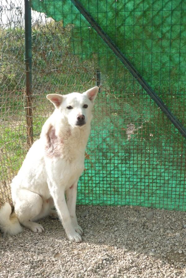 Bildertagebuch - Roccia: Ein wunderbarer, ganz besonderer Hund - VERMITTELT - 26404267iv