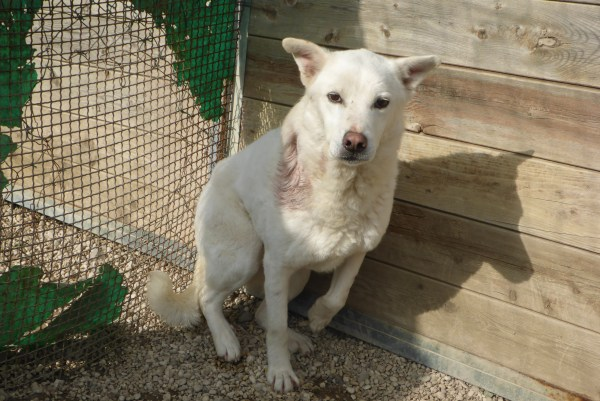 Bildertagebuch - Roccia: Ein wunderbarer, ganz besonderer Hund - VERMITTELT - 26404272ap