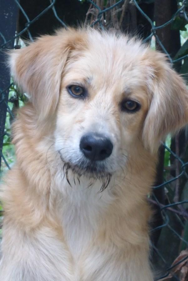 Bildertagebuch - Magic, ein hübscher kleiner Hundebengel der im Dog Village auf einer eigenen Familie wartet ... ZUHAUSE in ITALIEN gefunden! 26404292fi