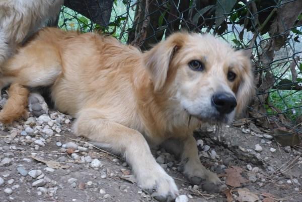 Bildertagebuch - Magic, ein hübscher kleiner Hundebengel der im Dog Village auf einer eigenen Familie wartet ... ZUHAUSE in ITALIEN gefunden! 26404295fx