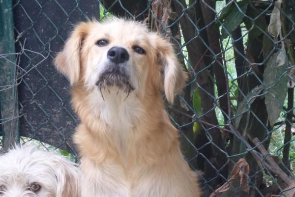Bildertagebuch - Magic, ein hübscher kleiner Hundebengel der im Dog Village auf einer eigenen Familie wartet ... ZUHAUSE in ITALIEN gefunden! 26404296tp