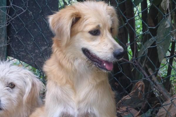 Bildertagebuch - Magic, ein hübscher kleiner Hundebengel der im Dog Village auf einer eigenen Familie wartet ... ZUHAUSE in ITALIEN gefunden! 26404297nk