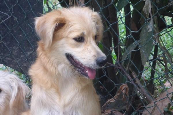 Bildertagebuch - Magic, ein hübscher kleiner Hundebengel der im Dog Village auf einer eigenen Familie wartet ... ZUHAUSE in ITALIEN gefunden! 26404298qz