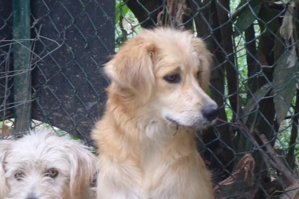 Bildertagebuch - Magic, ein hübscher kleiner Hundebengel der im Dog Village auf einer eigenen Familie wartet ... ZUHAUSE in ITALIEN gefunden! 26404299pi