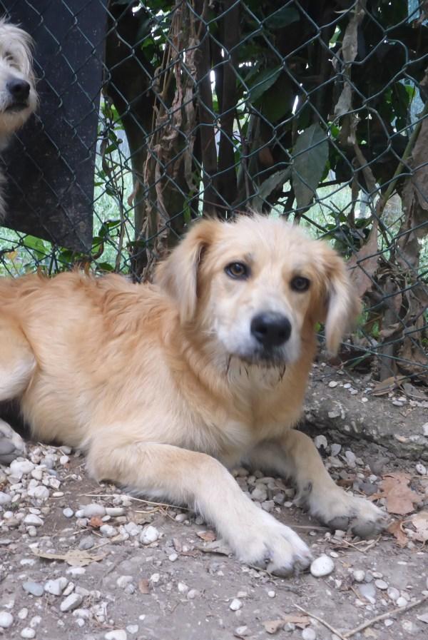 Bildertagebuch - Magic, ein hübscher kleiner Hundebengel der im Dog Village auf einer eigenen Familie wartet ... ZUHAUSE in ITALIEN gefunden! 26404300cl