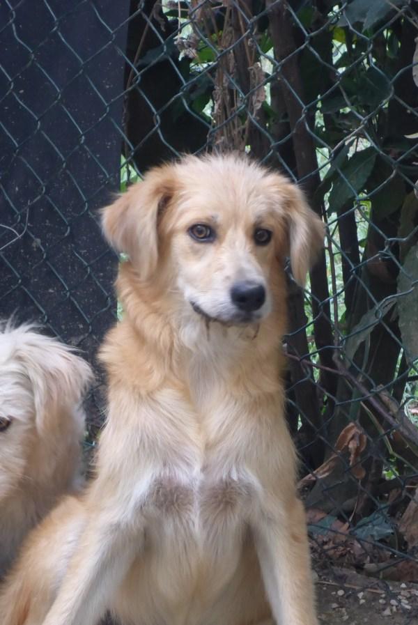Bildertagebuch - Magic, ein hübscher kleiner Hundebengel der im Dog Village auf einer eigenen Familie wartet ... ZUHAUSE in ITALIEN gefunden! 26404301yq