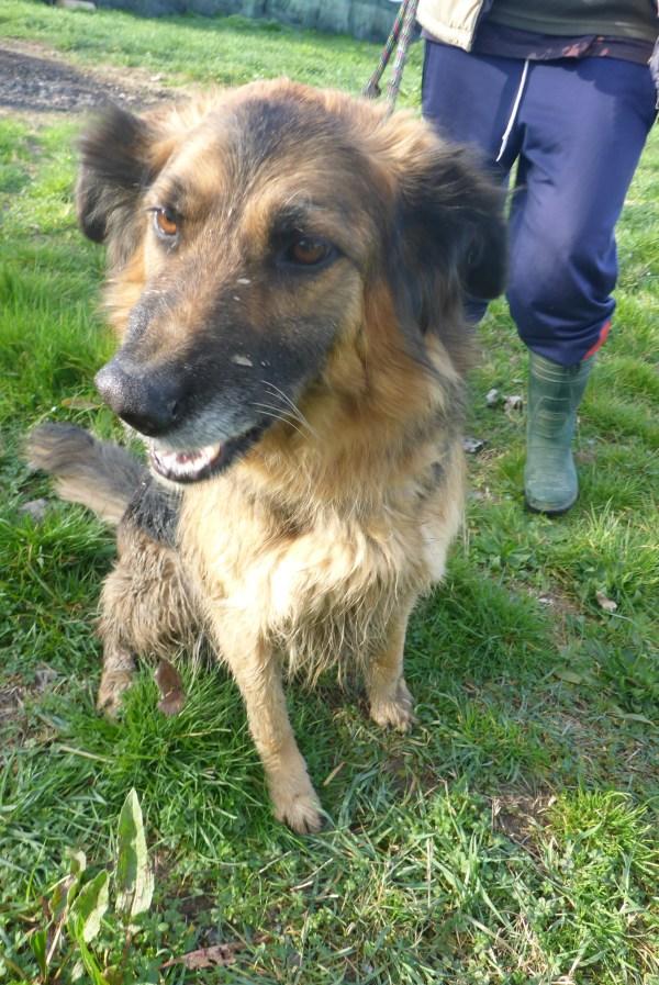 Bildertagebuch -  Urbania: Wunderschöne DOG VILLAGE- Hündin benötigt dringend Ihre Hilfe! über andere Orga  ZUHAUSE GEFUNDEN! 26455938je