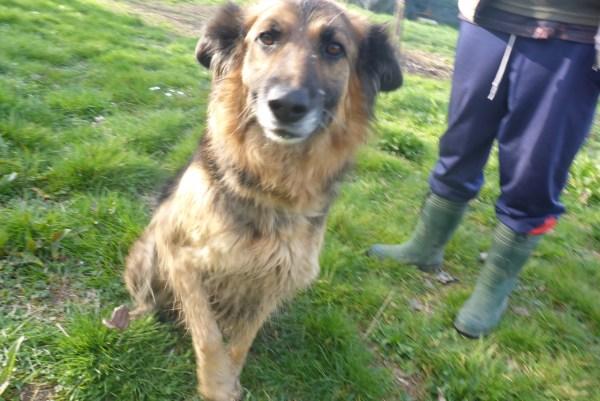 Bildertagebuch -  Urbania: Wunderschöne DOG VILLAGE- Hündin benötigt dringend Ihre Hilfe! über andere Orga  ZUHAUSE GEFUNDEN! 26455939ka